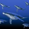 humpback-whale_MJo_845u